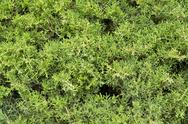 Stock Photo of green vegetation detail