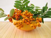 Stock Photo of Pome fruits of mountain ash