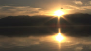 Stock Video Footage of Bird flies by stunning lake with reflection at sunset