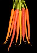 Bunch of organic carrots in different colors isolated on black Stock Photos