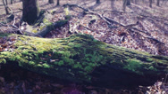 Stock Video Footage of Green Mossy Log with Good Color & Shallow Depth 60fps HD