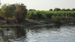 Camera boat - Nile shores with cows and people, Egypt Stock Footage