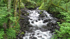 Oneonta Creek Cascade, Columbia River Gorge, Oregon Stock Footage