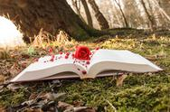 Stock Photo of book and rose