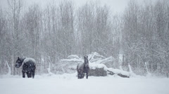 Horses Outside during a Winter Snowstorm Stock Footage