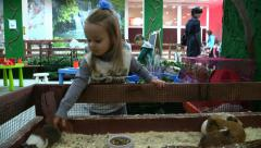 Girl playing with guinea pigs in the petting zoo Stock Footage