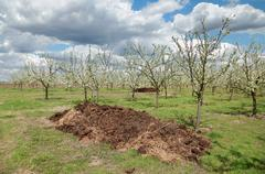 Agriculture, fertilizer in orchard Stock Photos