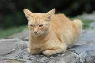 Stock Photo of domestic cat