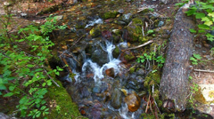 Glacier National Park Stream Stock Footage