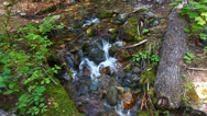 Stock Video Footage of Glacier National Park Stream