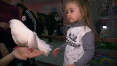 Girl stroking the dove. Petting zoo. Stock Footage