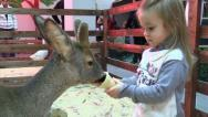 Stock Video Footage of Girl Feed Deer, Petting Zoo.