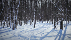 Woman Cross-Country Skiing Alone in Forest Stock Footage