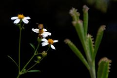 bee collecting pollen - stock photo
