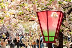 sakura flower for adv or others purpose use - stock photo
