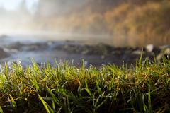 Morning dew in the gras Stock Photos