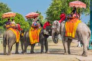 Stock Photo of tourists riding elephants ayutthaya bangkok thailand