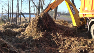 Stock Video Footage of industrial excavator loading soil and roots into dumper truck