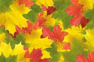 Stock Illustration of autumn colorful leaves background