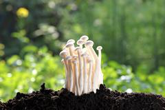 white mushroom on ground invigorating. - stock photo