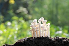 White mushroom on ground invigorating. Stock Photos