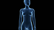 Stock Video Footage of medical animation showing the woman´s stomach