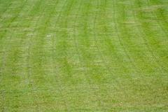 Soccer field was cut grass Stock Photos