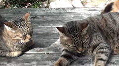 Two similar cats on wooden table Stock Footage