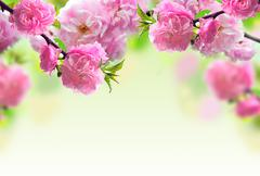 Abstract pink flower design Stock Photos