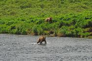 Stock Photo of two young bears approaching a favorite fishing hole