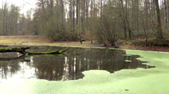 Small pond in the woods. Stock Footage