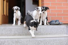 puppies first trip to the outer world - stock photo