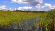 Stock Video Footage of Exciting Airboat Ride in Central Florida