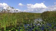 Stock Video Footage of Great nature of Central Floridas wetlands