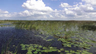 Stock Video Footage of Breathtaking Airboat Ride in the Everglades