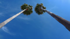 Freeport Palm Trees Sway Wind Blue Sky HD Stock Footage