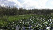 Stock Video Footage of Fantastic landscape of Central Florida
