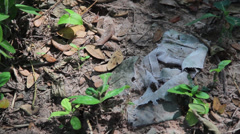 ECU pan across victims clothing scraps in old mass grave, Cambodia Stock Footage