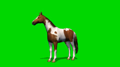 Horse  in motion - seperated on green screen Stock Footage