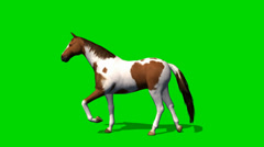 Horse walking - seperated on green screen Stock Footage