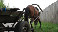 Stock Video Footage of Standing stopped horse cart, grazing harnessed animal in village, click for HD