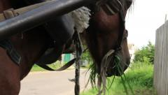 Close up harnessed horse grazing eats grass village countryside, click for HD Stock Footage