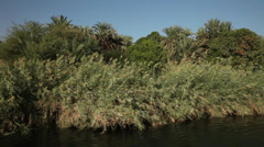 Camera boat - trees and palms on the Nile shores, Egypt Stock Footage