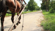 Stock Video Footage of Horse cart carriage, low angle view, harnessed animal, summer, click for HD