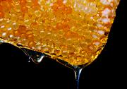 Stock Photo of honey dripping from a honey comb
