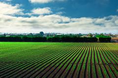green rows on field and blue sky, agricultural field - stock photo