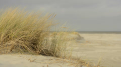 Dune grass Stock Footage