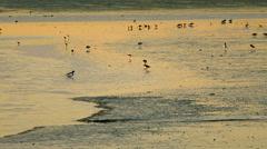 Sea birds in a sunset Stock Footage