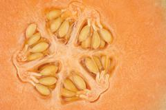 orange melon kernel in close up - stock photo