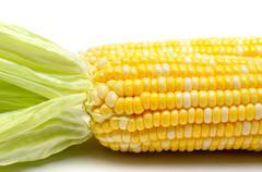 Stock Photo of fresh corn isolated closeup shot